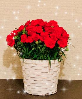 「母の日」から「母の月」に…。5月にお花を贈ろう。